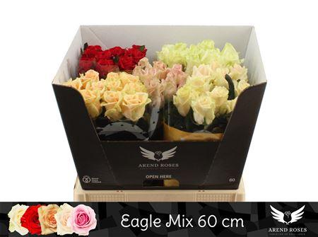 R Gr Eagle Mix