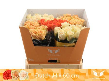 R Gr Dutch Mix